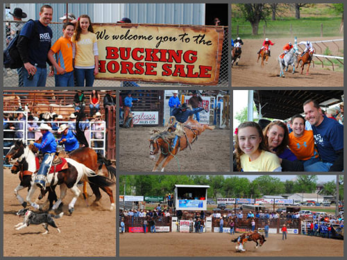 "The ""World Famous"" Bucking Horse Sale in Miles City, Montana"