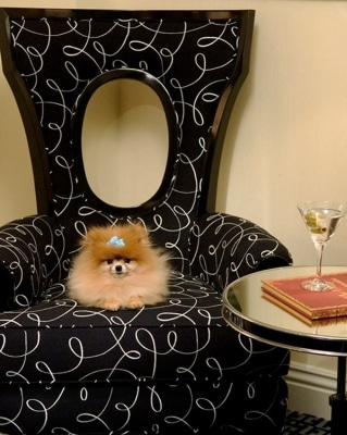 Fluffy dog in chair