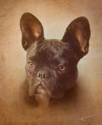 Florida artist A.J. Brockman painted this portrait of Lenny, Susan Spencer-Wendel's French bulldog. Brockman has spinal muscular atrophy and uses two ...