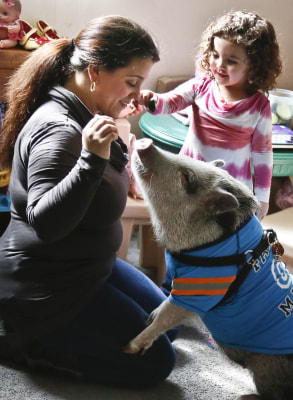 Danielle Forgione, left, and her daughter Olivia, 3, play with Petey, the family's pet pig, on Thursday, March 21, 2013, in the Queens borough of New ...