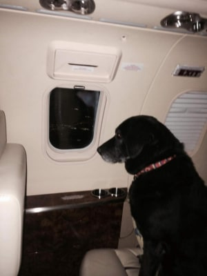 Helen Rich, an heir to the Wrigley fortune, had two of her personal assistants accompany Lady on a private jet to transfer the dog from a Kansas shelt...