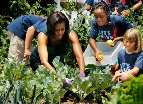WASHINGTON - JUNE 04:  U.S. first lady Michelle Obama harvests vegetables with students from Hollin Meadows Elementary School in Alexandria, Virginia,...