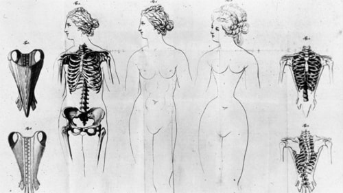 Illustration of how corsets squeezed women's ribs