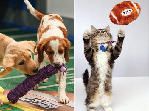 Image: Puppies, kittens
