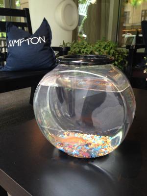Image: loaner goldfish