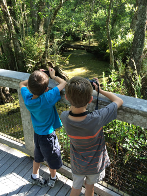 The Gaddis brothers look for animals at the Booker Creek Preserve near Tarpon Springs, Florida.
