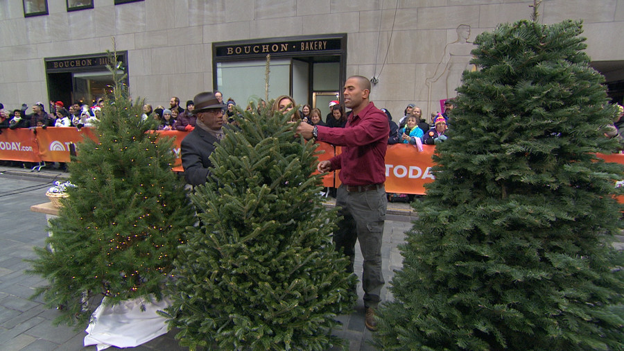 How To Buy And Take Care Of Your Christmas Tree