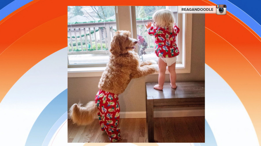 Canadian photographer Jesse Holland's adorable photos of her baby and dog in matching outfits make for the cutest