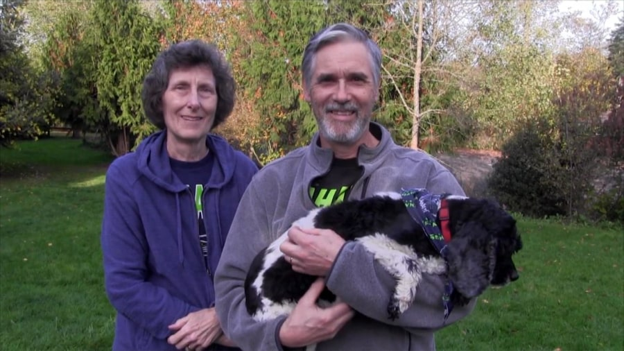 Old dogs get a second chance at life from inspiring couple