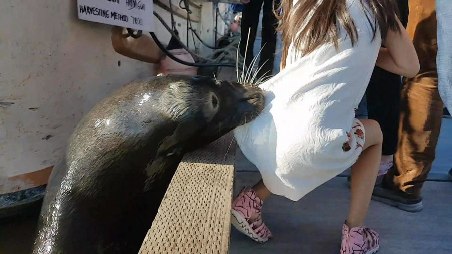 Sea lion grabs girl off dock, pulls her into harbor