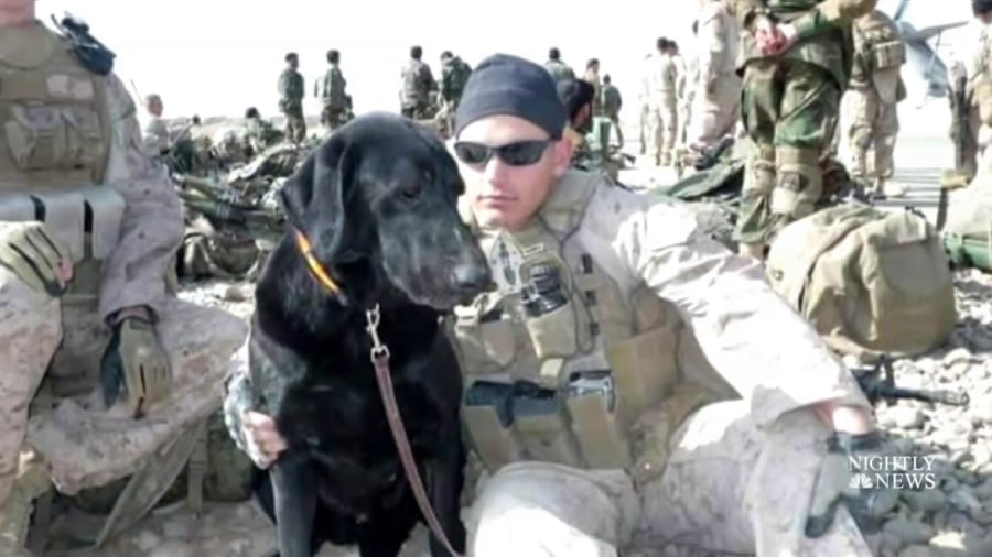 Marine K-9 takes one last emotional ride with veteran
