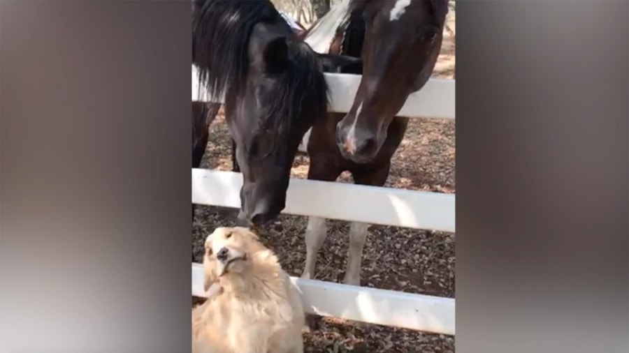 Canadian horse 'checks in' at pet-friendly Kentucky motel