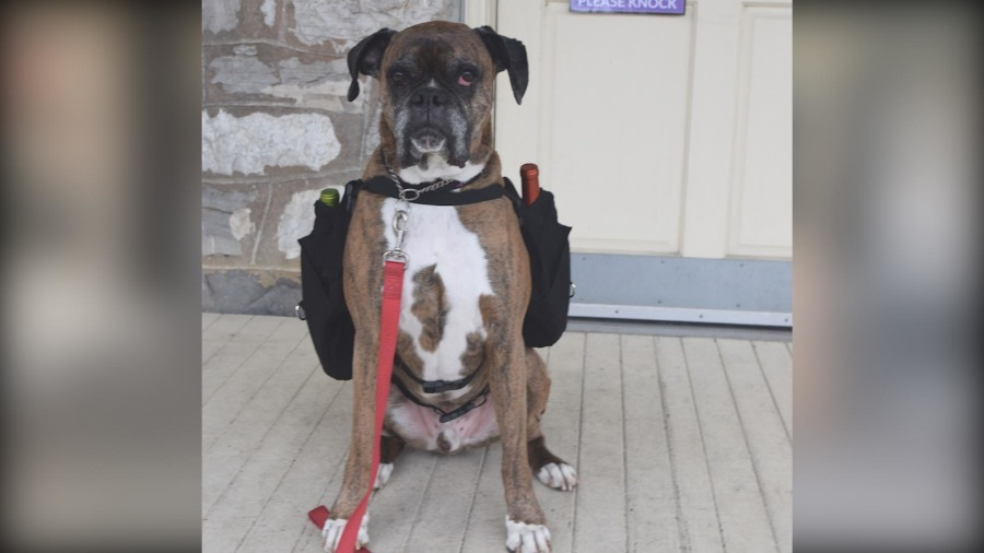 Winery starts curbside dog delivery service during coronavirus outbreak