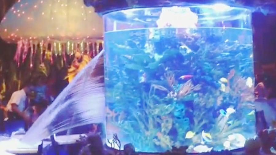 Disney restaurant s fish tank springs a leak for Spring water for fish tank