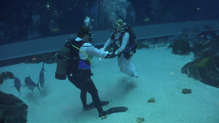 Couple Gets Married In Underwater Wedding Ceremony At