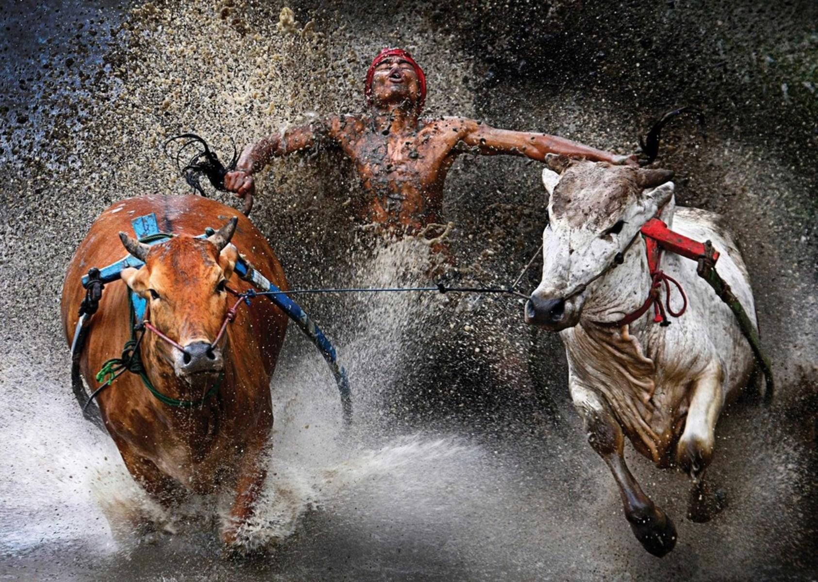Image: World Press Photo 2012 - 1st Prize Sports Action Single