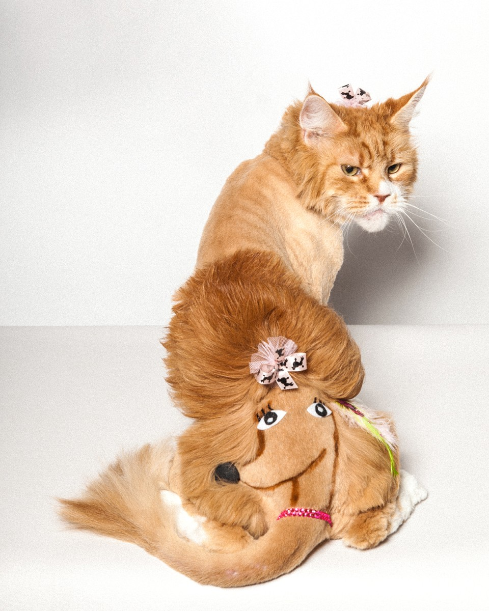 About Us  Affectionate Pet Care