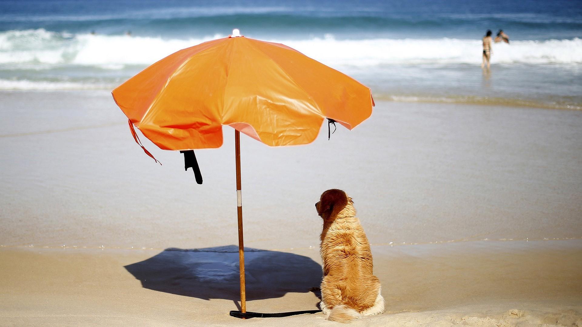 Image: A dog sits under a sun umbrella on Sao Conrado beach  in Rio de Janeiro