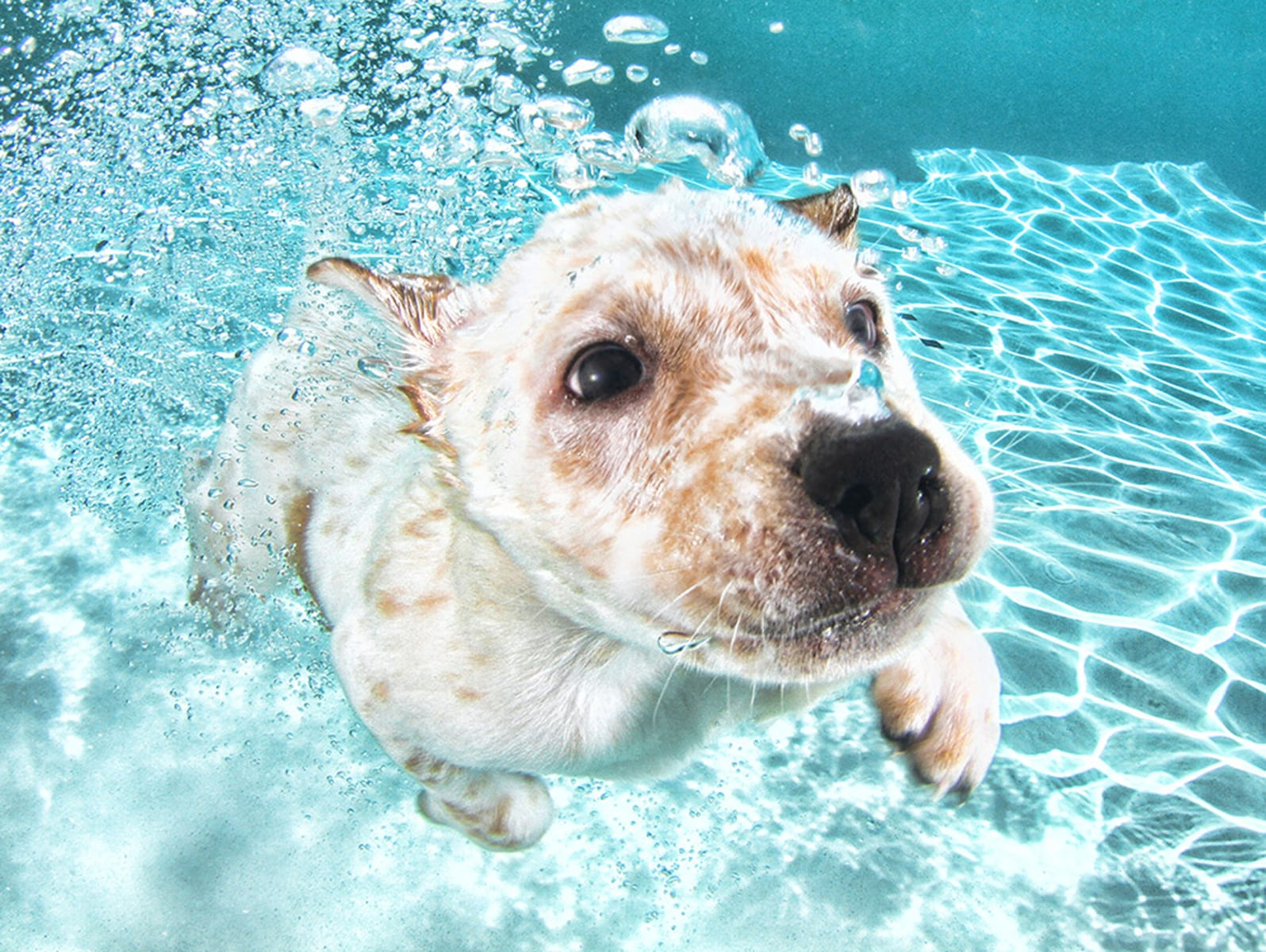 39 underwater puppies 39 dive into these photos of canine for Cute pool pictures