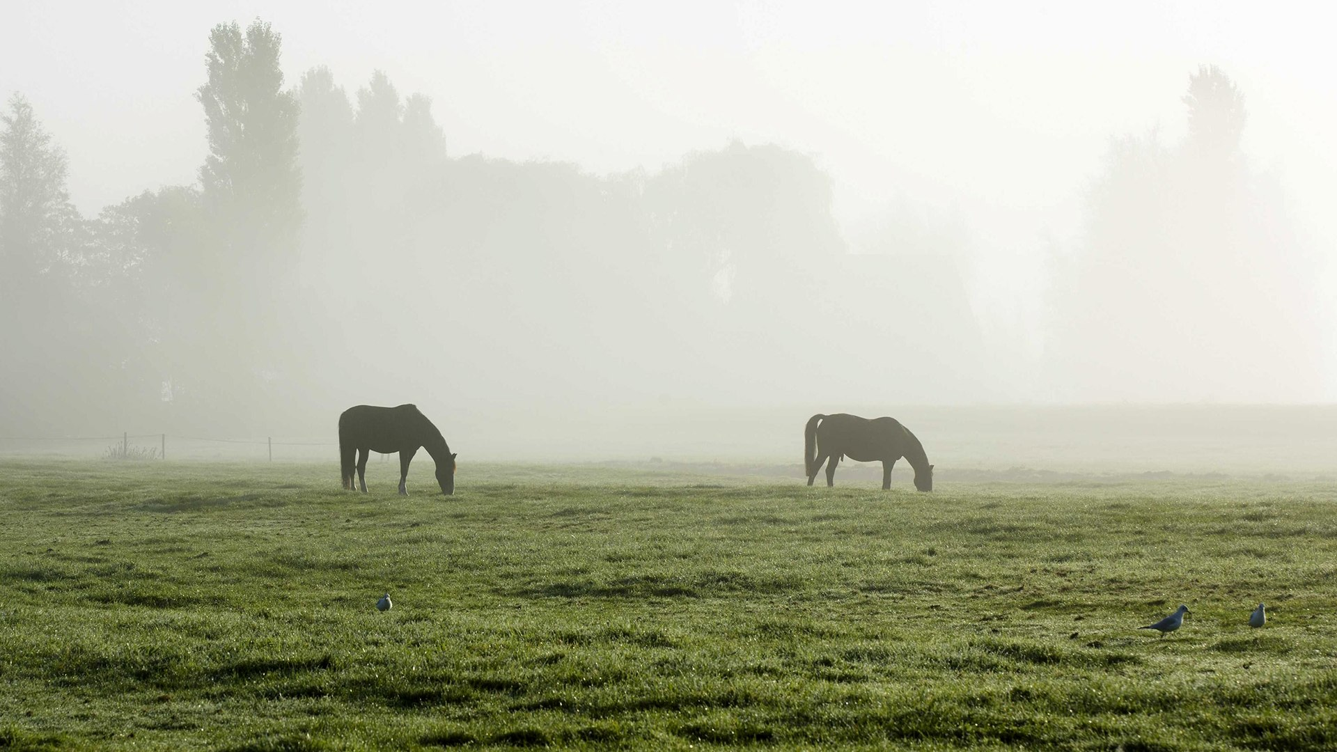 Image: Morning fog in the Netherlands
