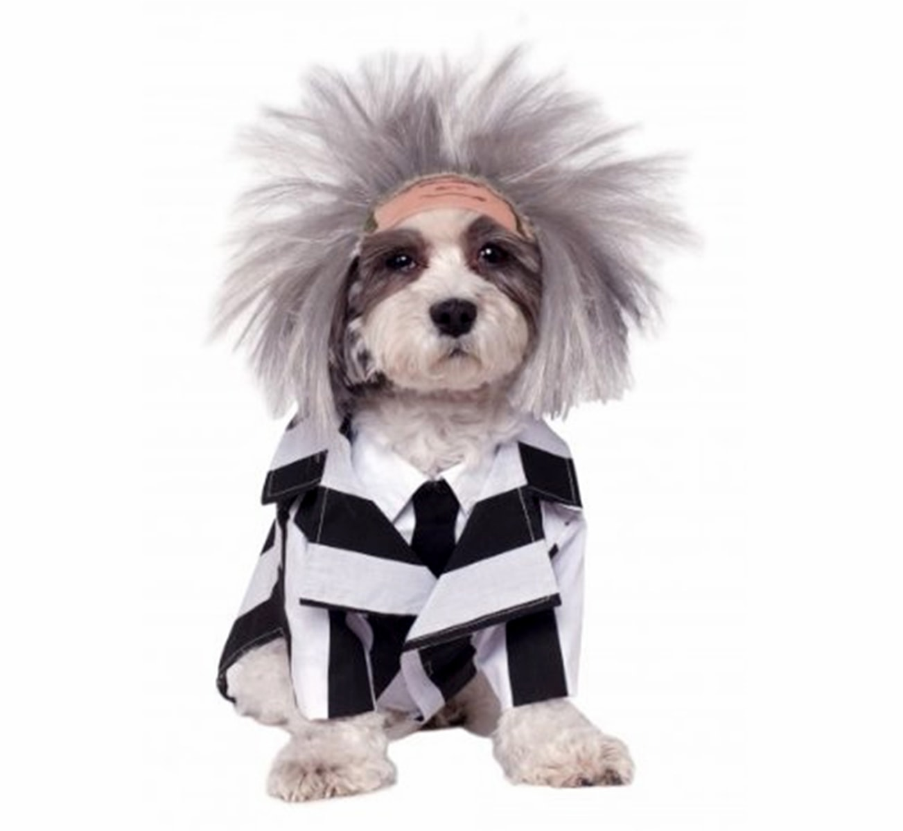 Halloween Costumes For Dogs Amazon