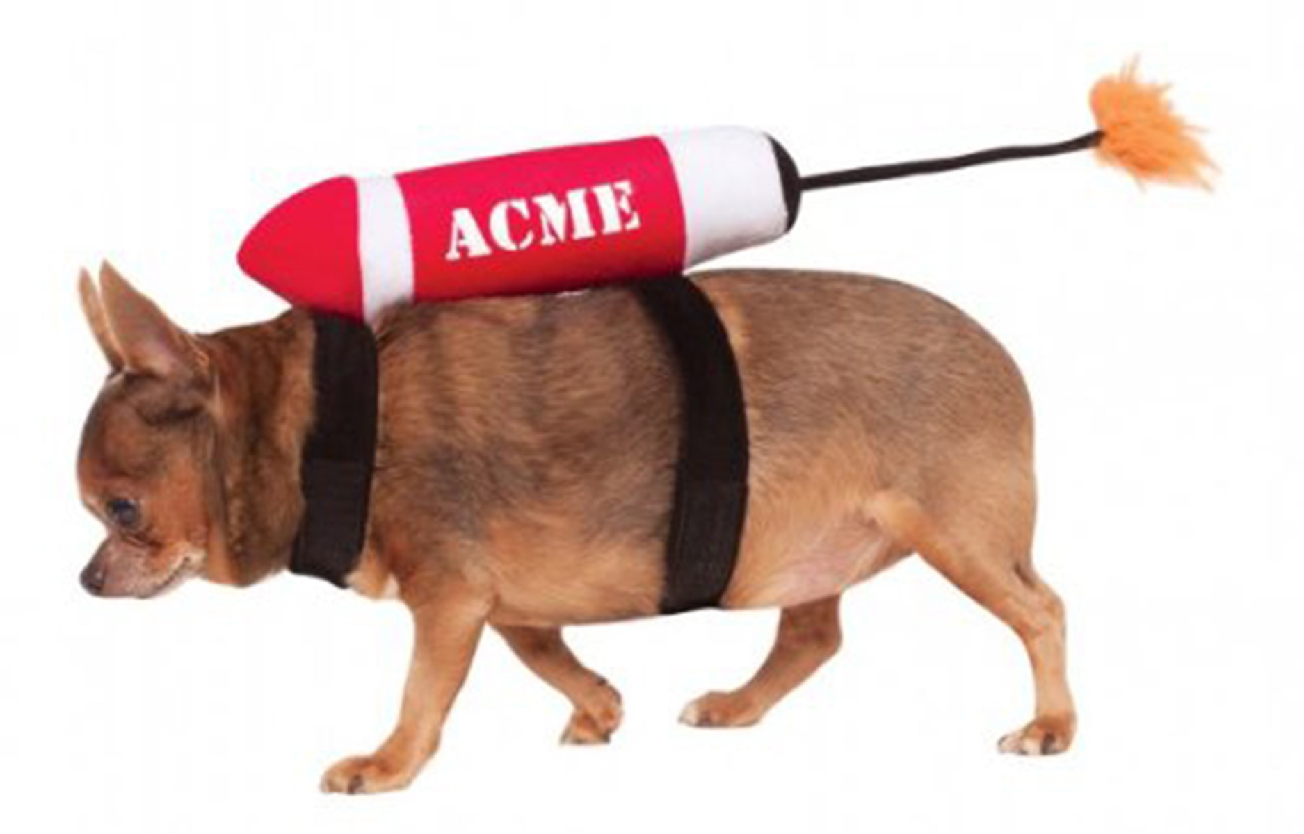 27 of the funniest pet halloween costumes today com