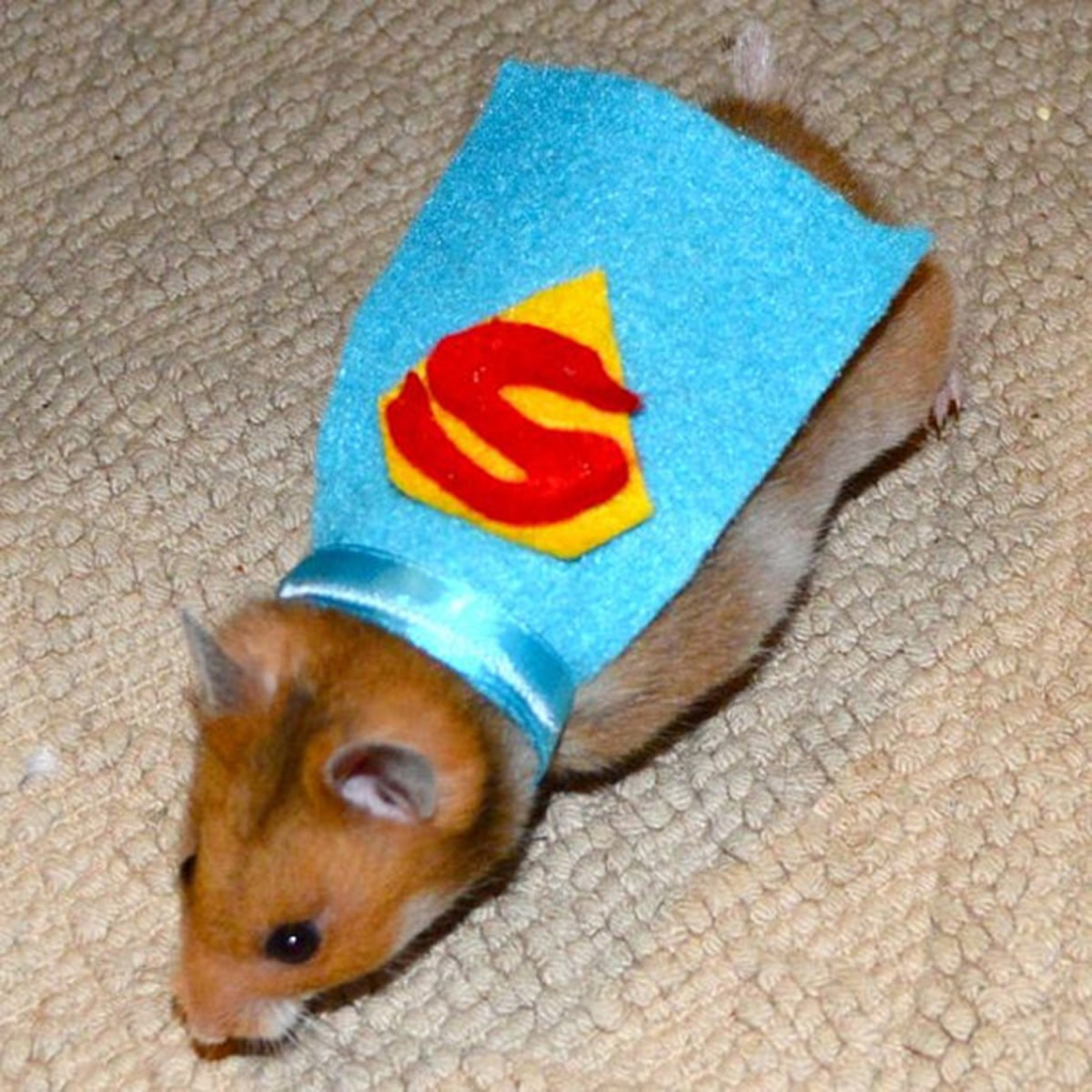 27 of the funniest pet Halloween costumes - TODAY.com