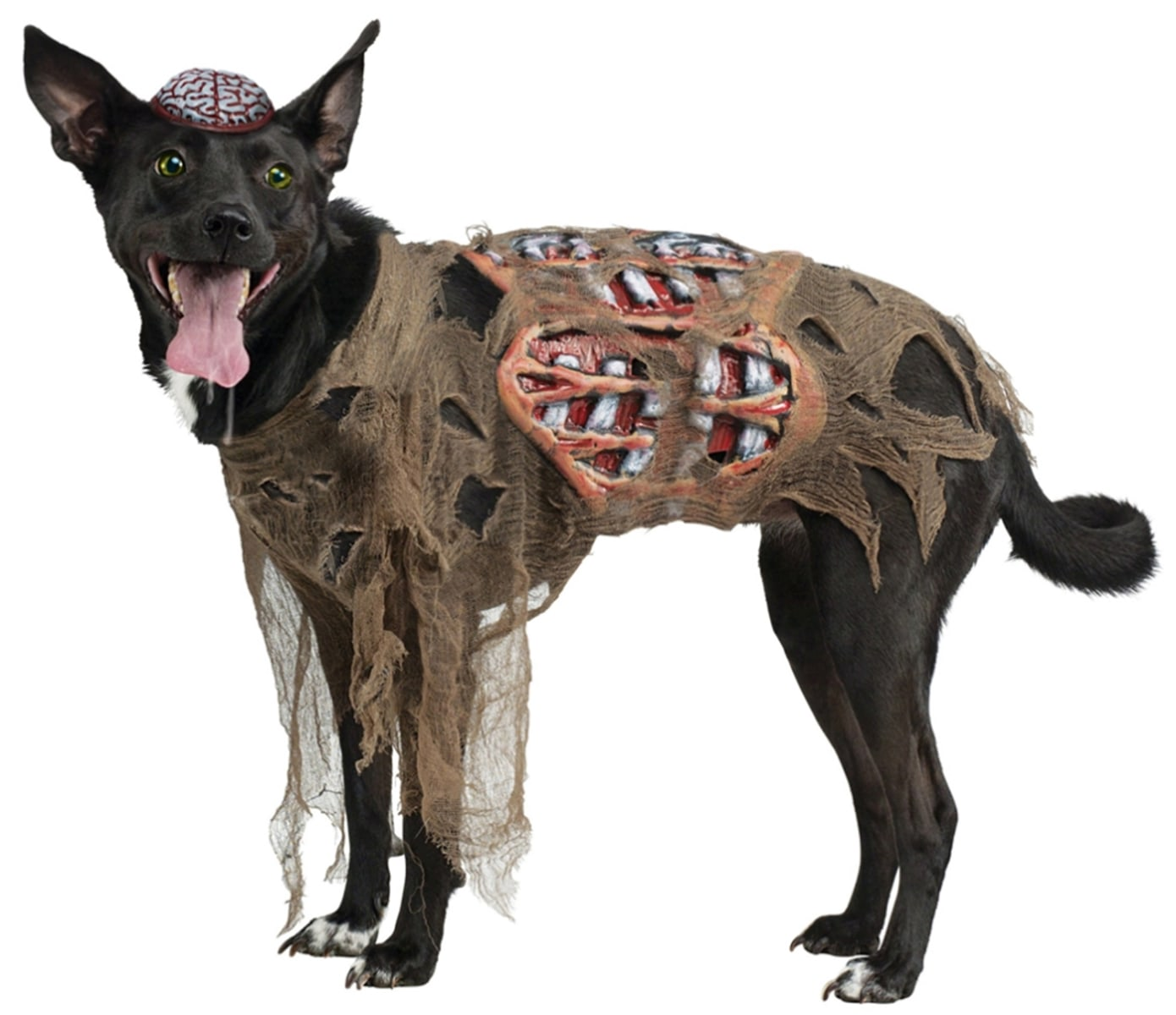 27 of the funniest pet halloween costumes - Halloween Costume For Small Dogs