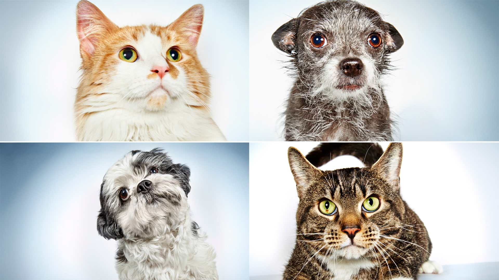 22 adorable animals up for adoption TODAY