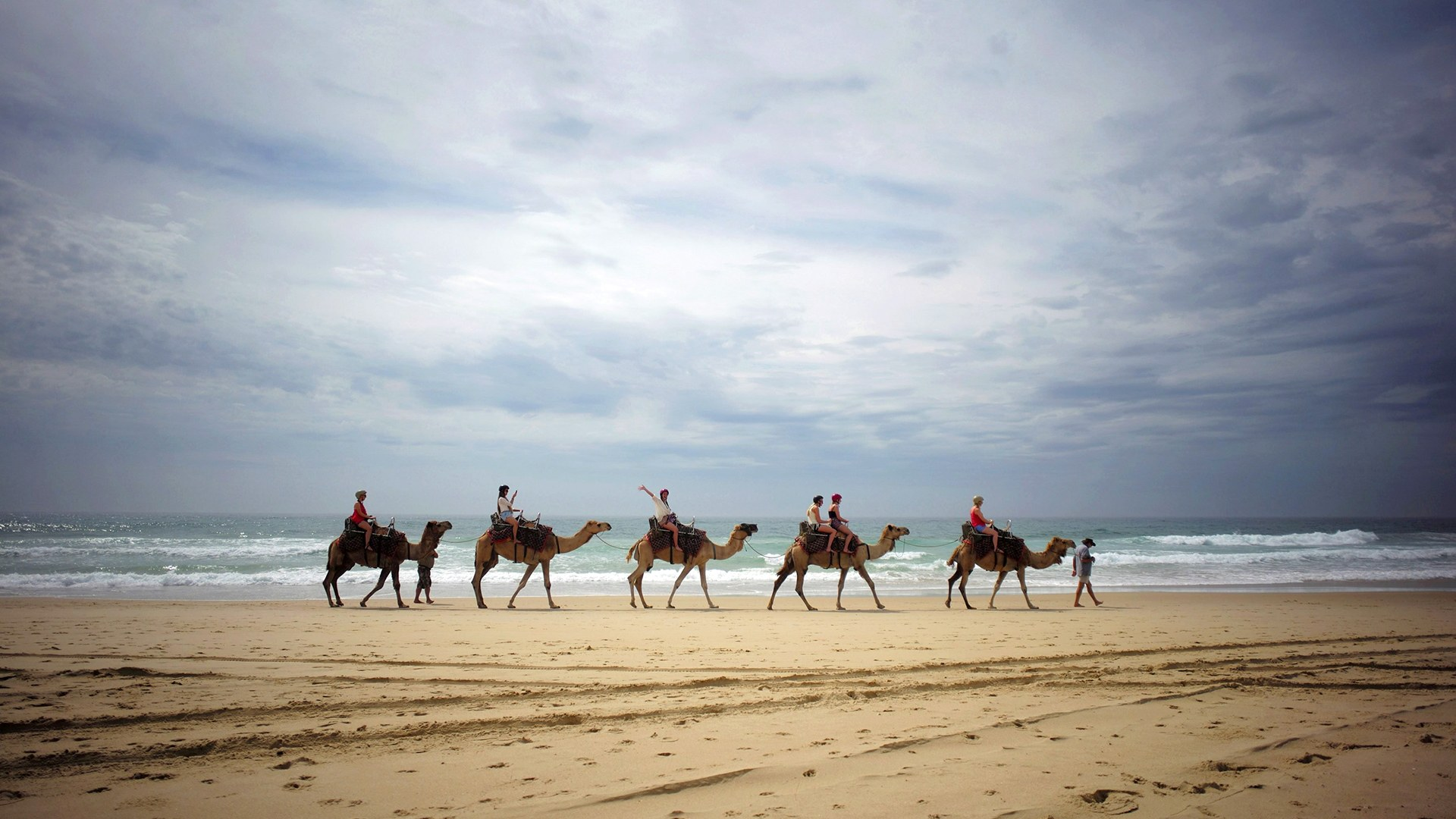 Image: Tourists ride on camels belonging to Port Macquarie Camel Safaris alongside the Pacific Ocean on Lighthouse Beach