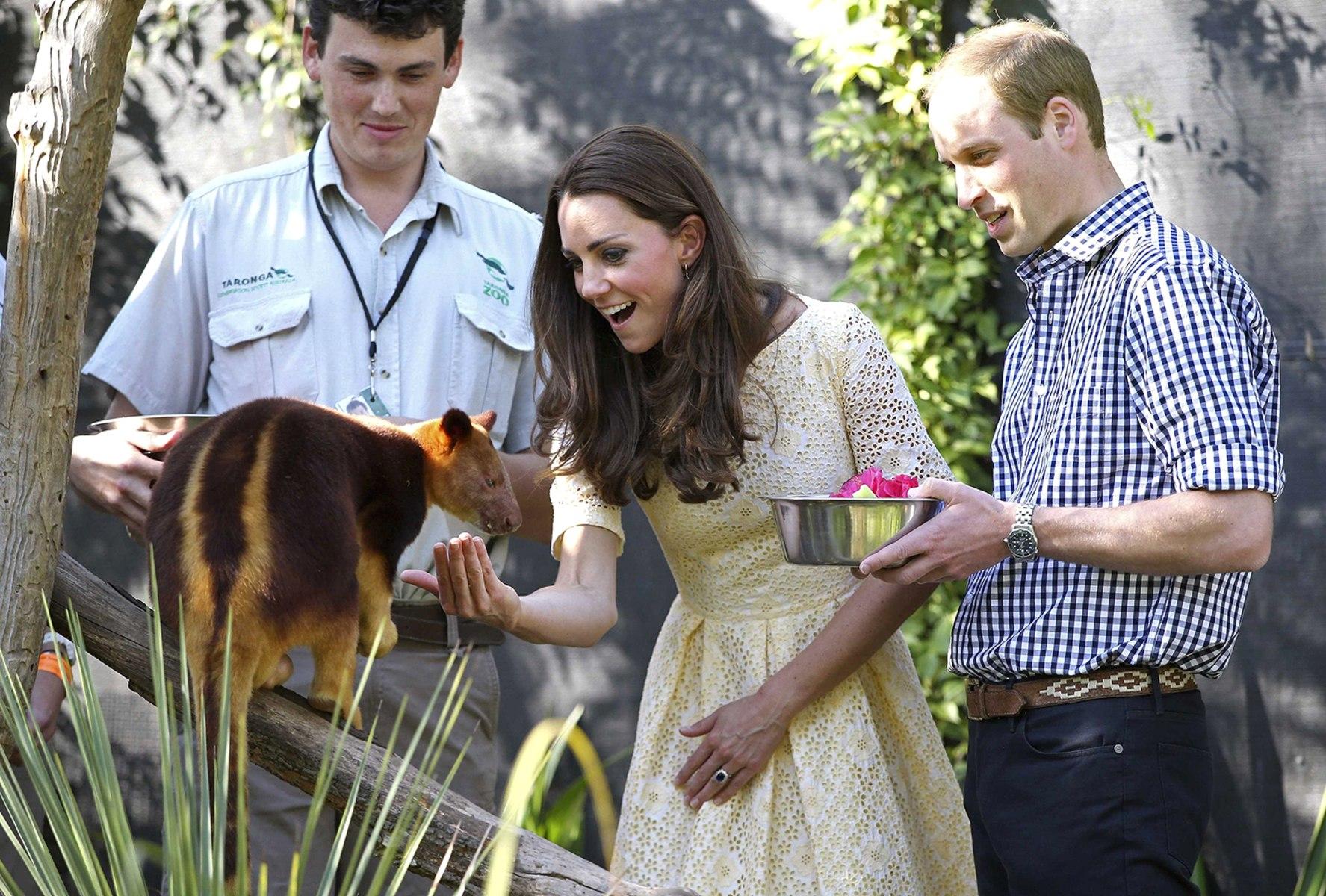 Image: Britain's Prince William And Catherine, Duchess Of Cambridge, Feed A  Tree Kangaroo