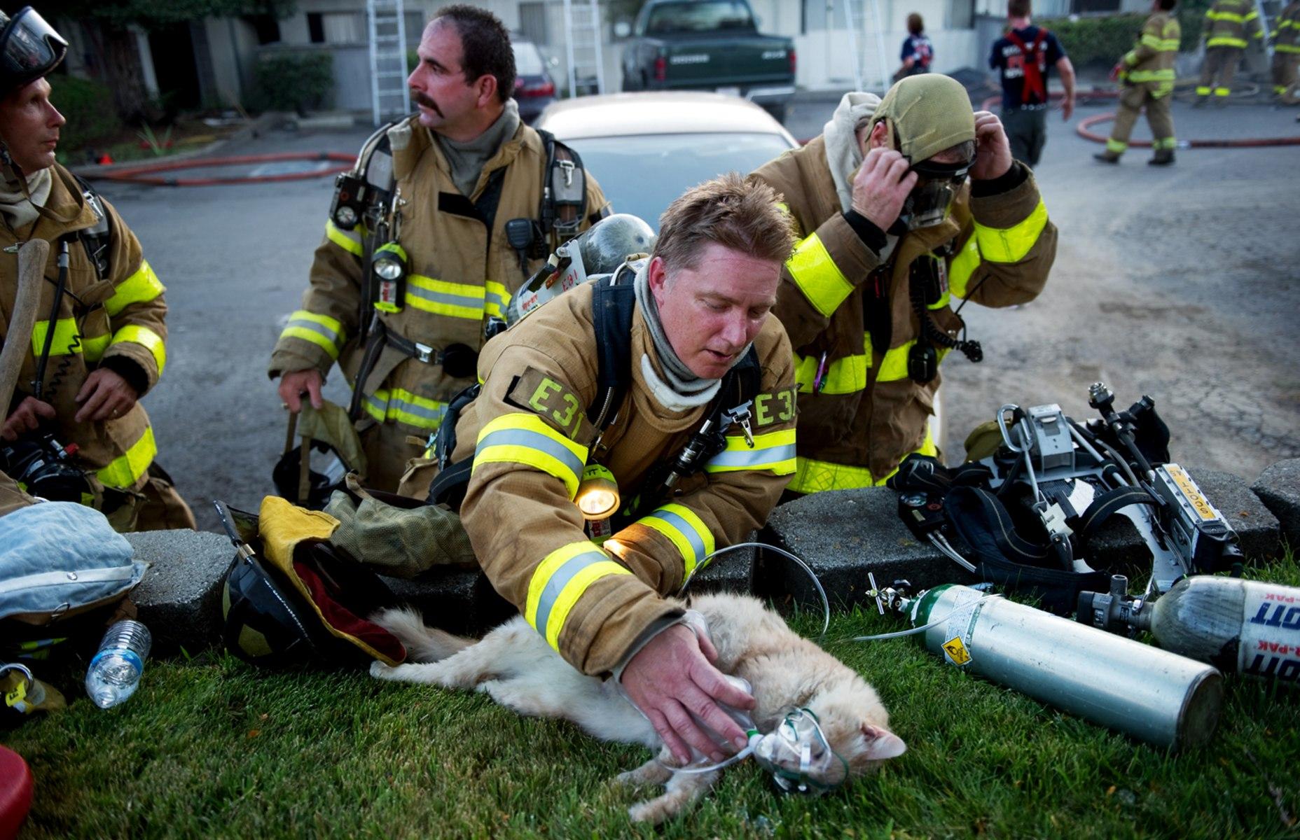 Image: Sac Metro firefighter Matt Randazzo tries to resusitate a cat o