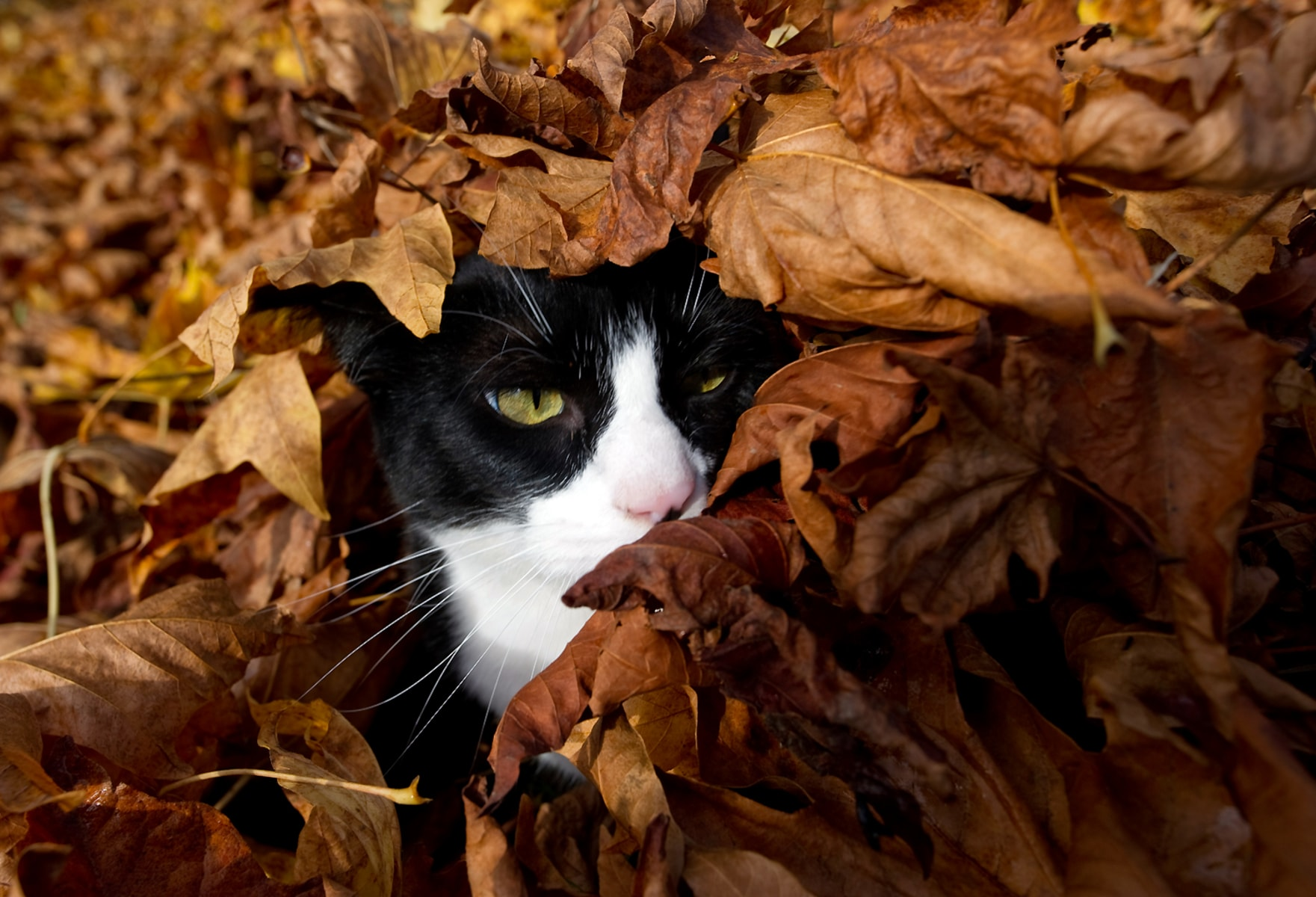 Image: Cat Leaves