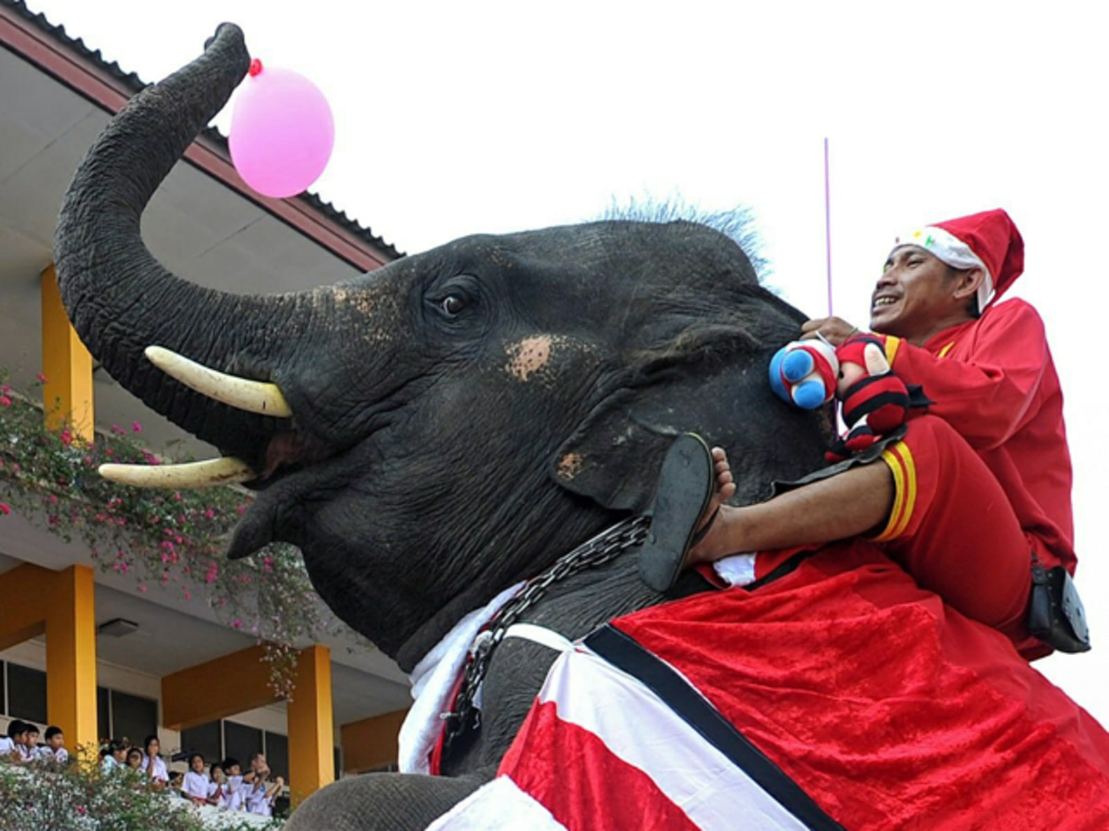 Image: An elephant dressed in a Santa Claus cos