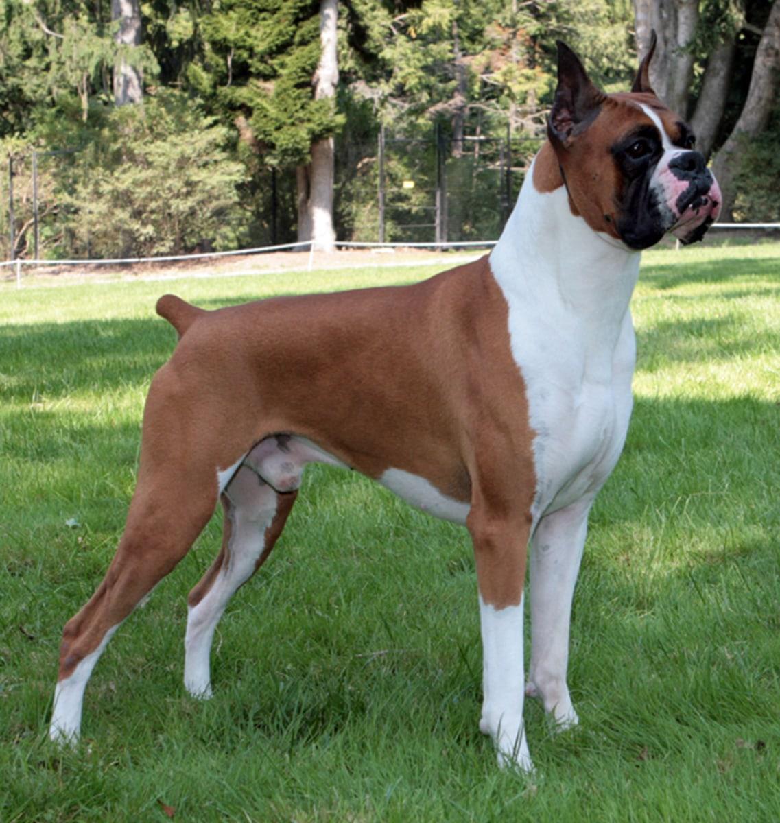 Bella Bentley Molly And Max Again Top Puppy Names