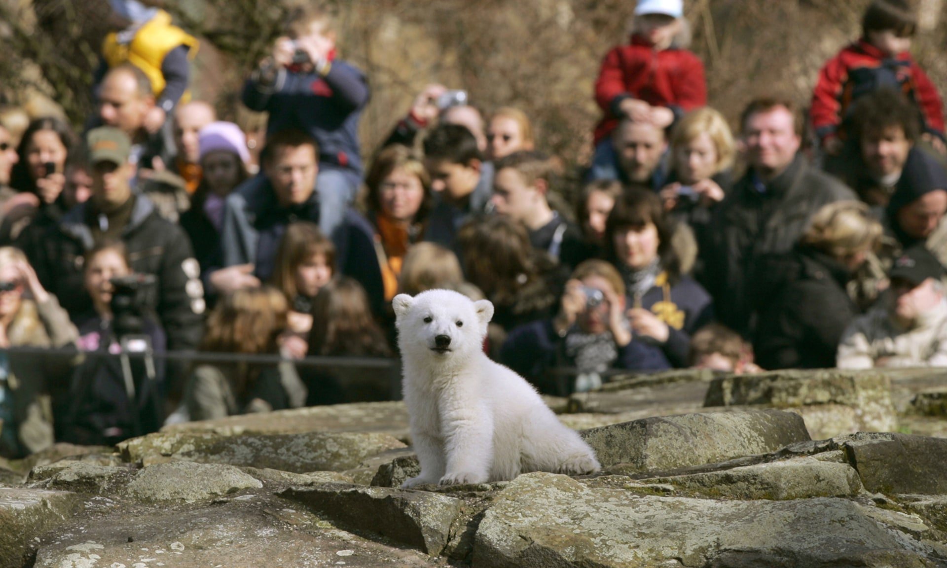 Image: File photo of visitors watching Polar bear cub Knut in Berlin zoo