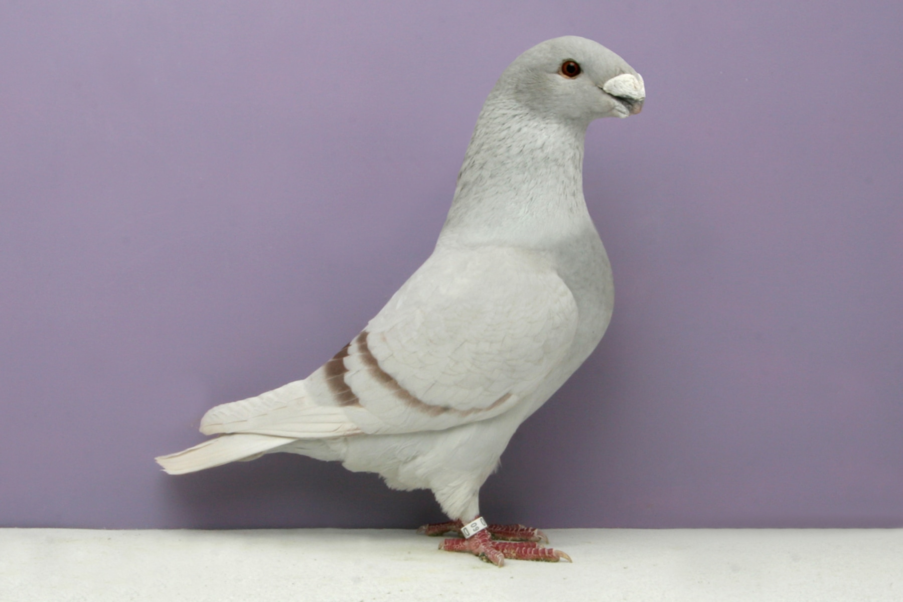 Pigeon Food Pets At Home