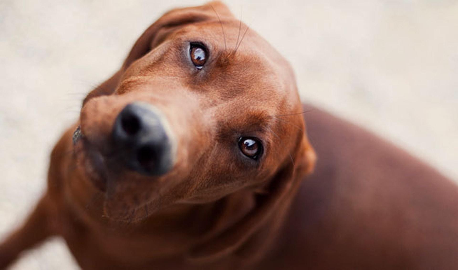 11 American dog breeds - TODAY.com