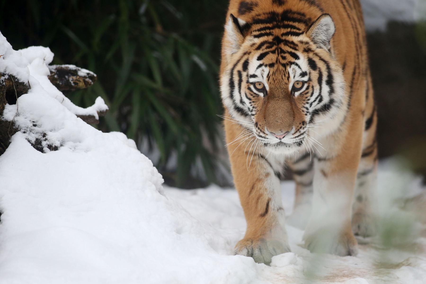 Animal Tracks: Dec. 12