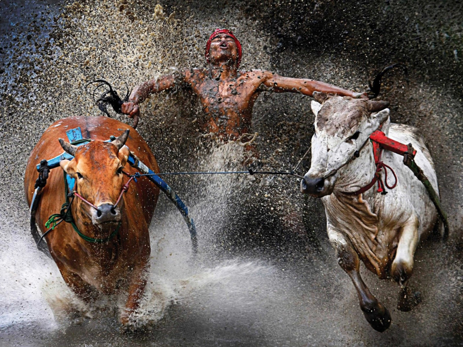 Image: A photo of an Indonesian jockey won 1st prize in the Sports Action Single category.