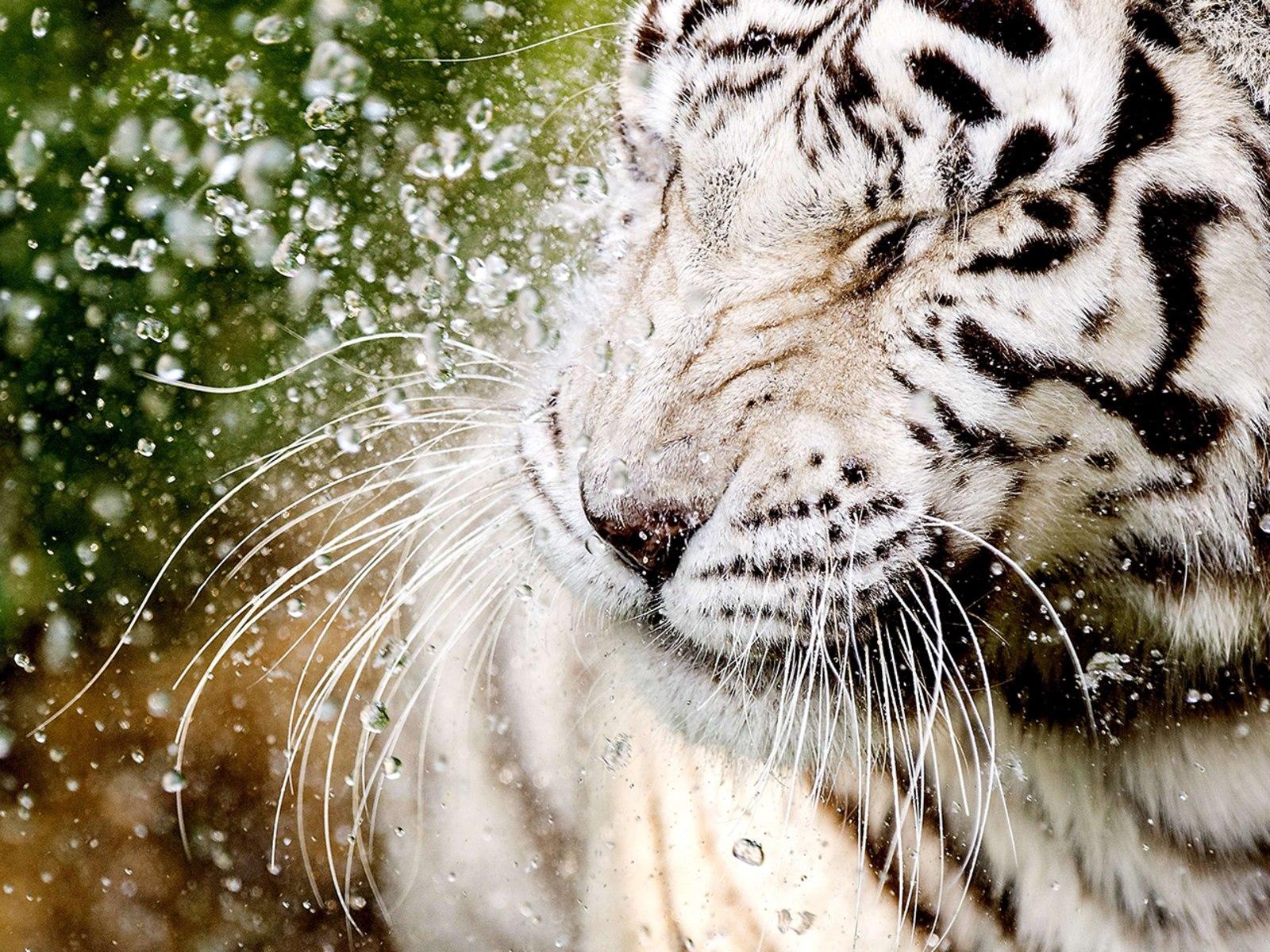 Image: NETHERLANDS-ANIMALS-ZOO