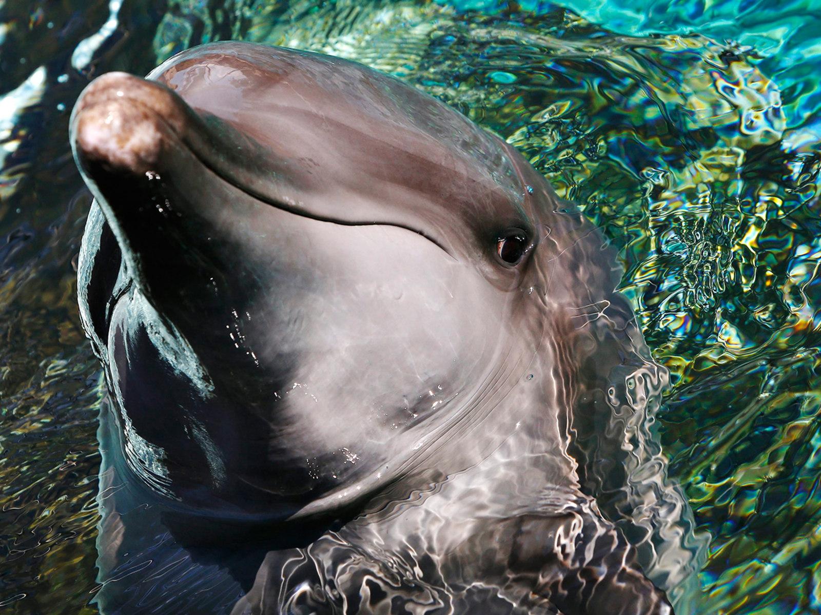 Image: Singapore Marine Life Park Dolphin Island