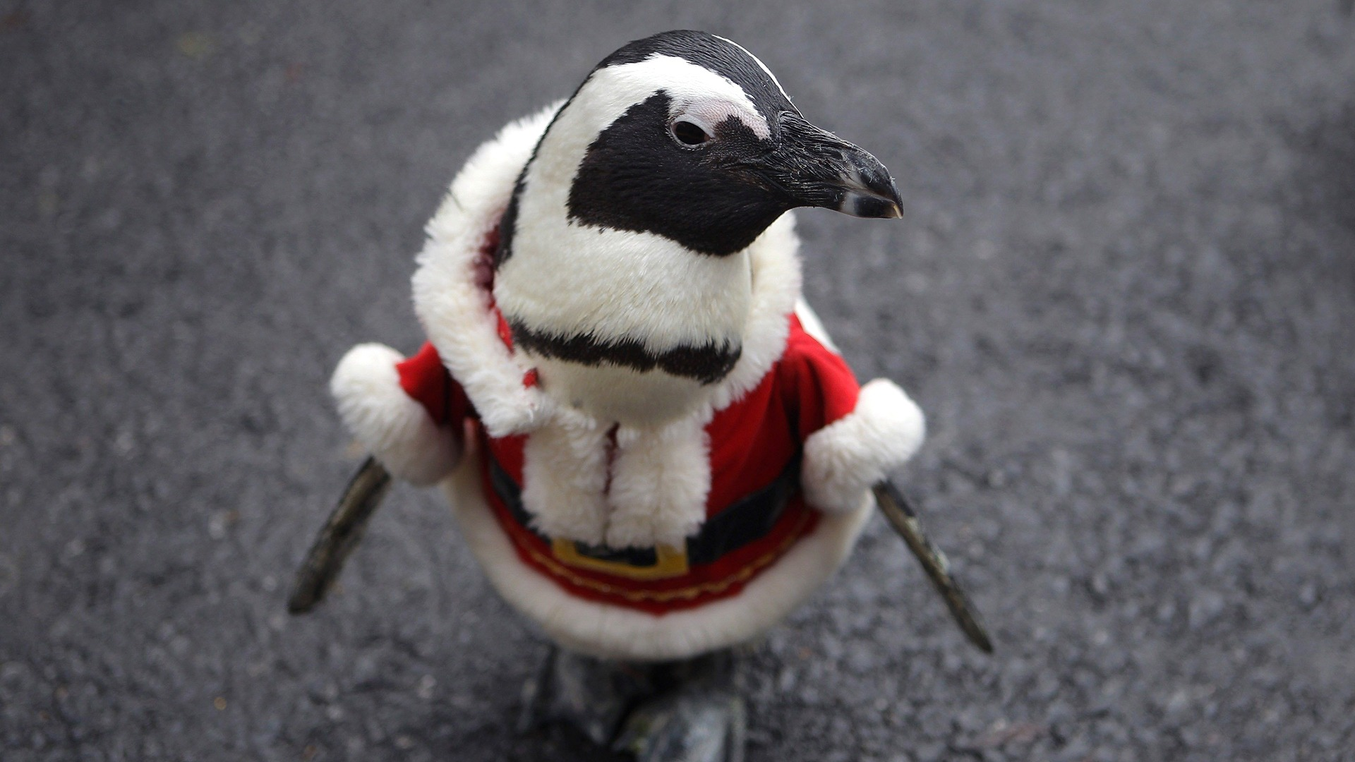 Image: Penguins Dress As Santa Claus At Everland