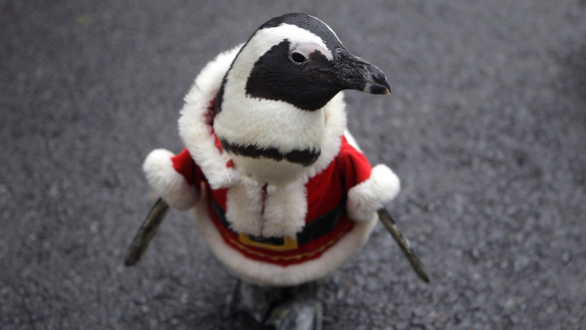 Image: Penguins Dress As Santa Claus At Everland