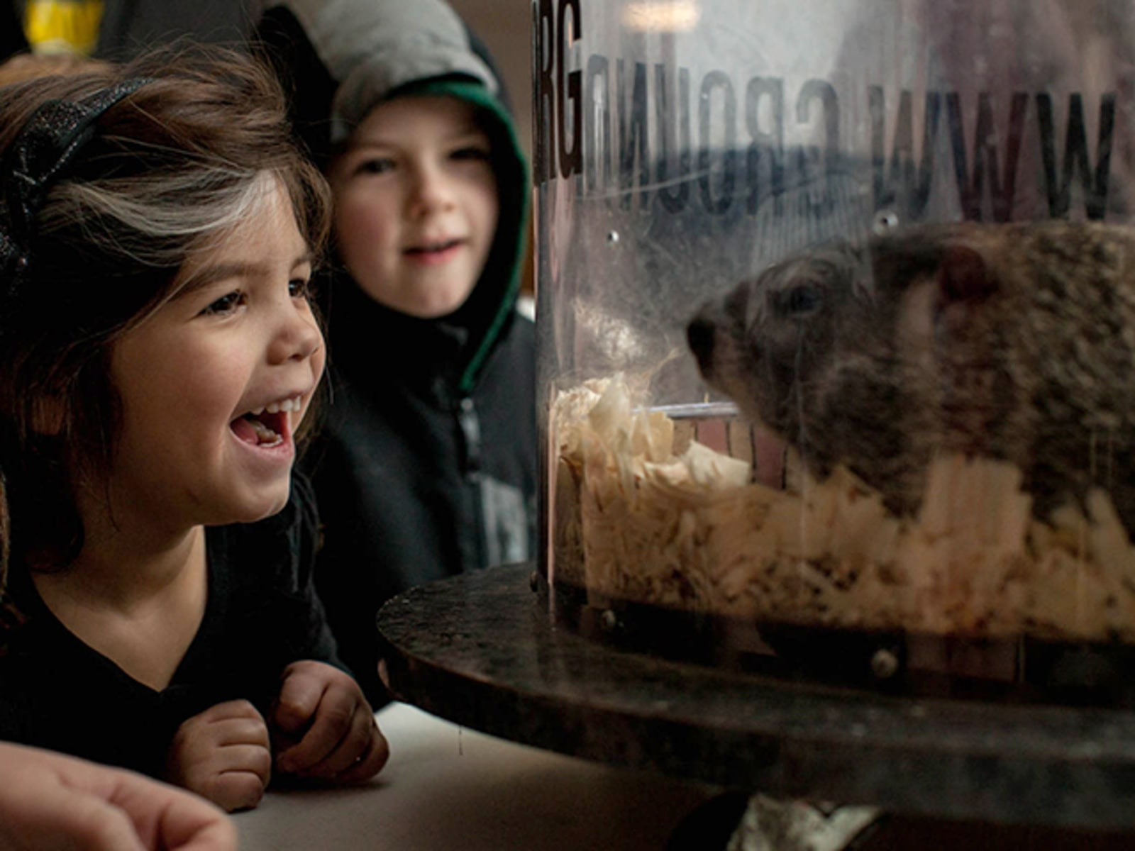 Image: Kids enjoy a sight of Punxsutawney Phil, the groundhog credited with predicting the weather