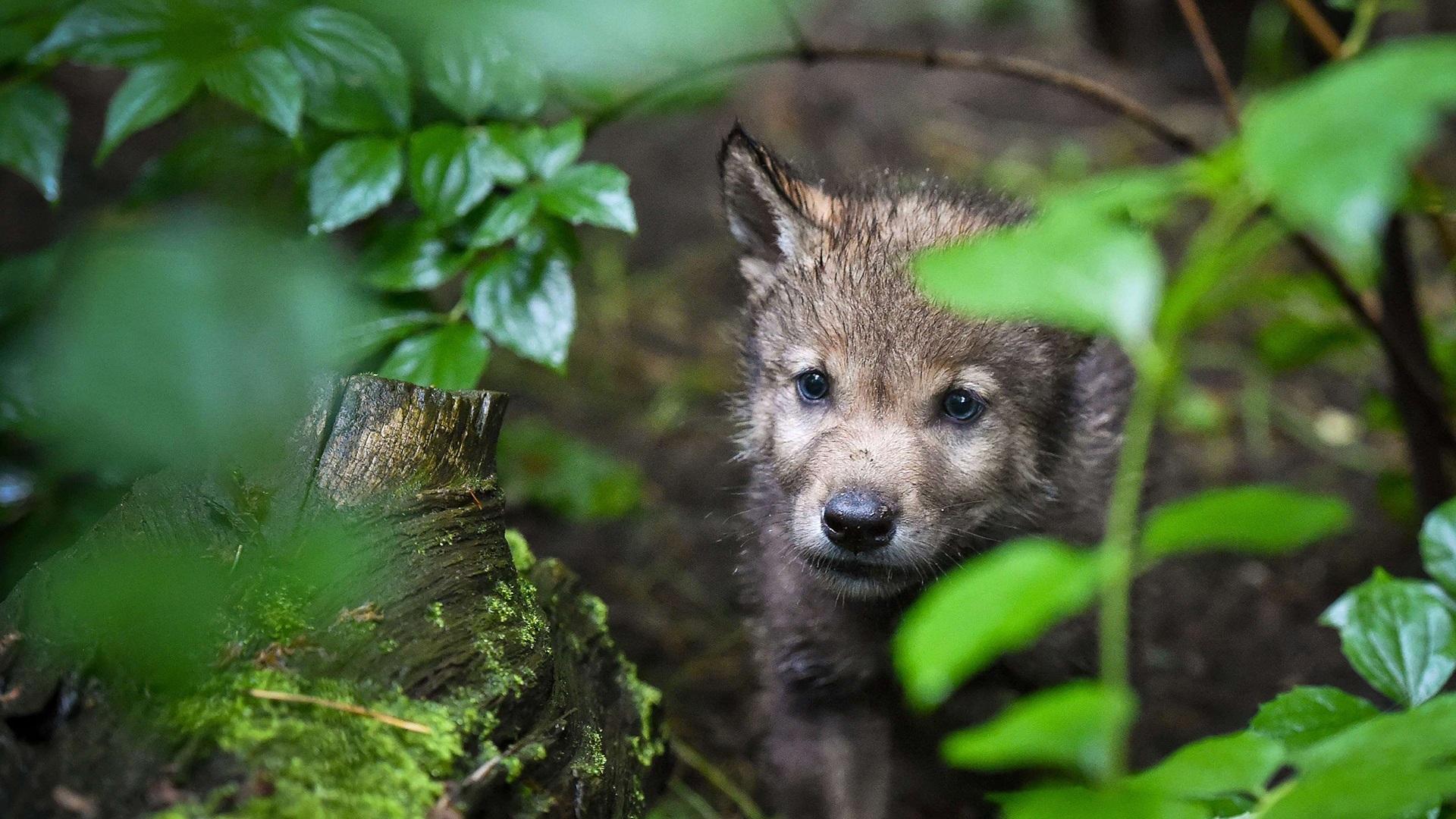 Image: GERMANY-ANIMALS