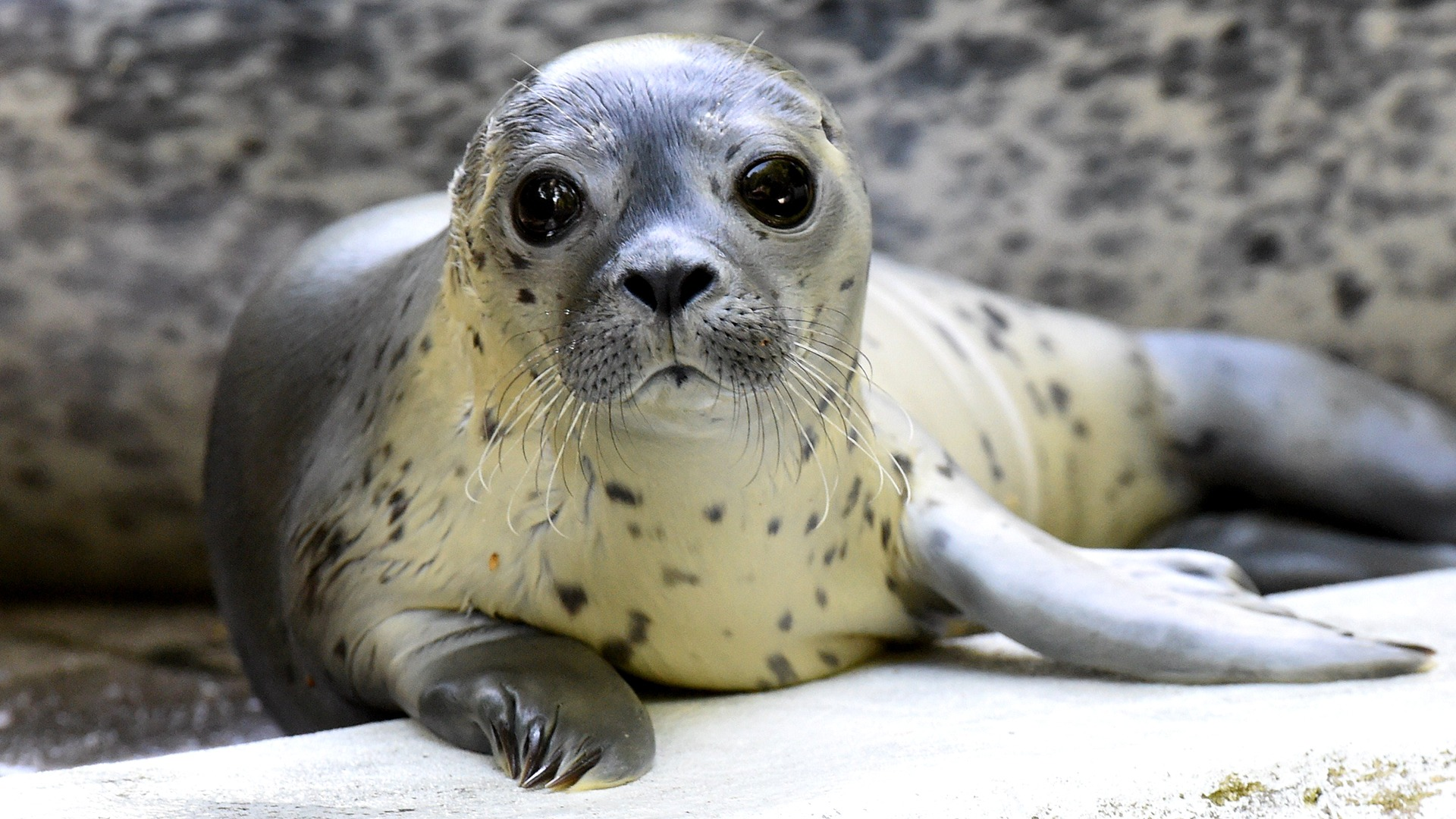 Image: GERMANY-ANIMAL-FBL-WC-2014-FEATURE-SEAL