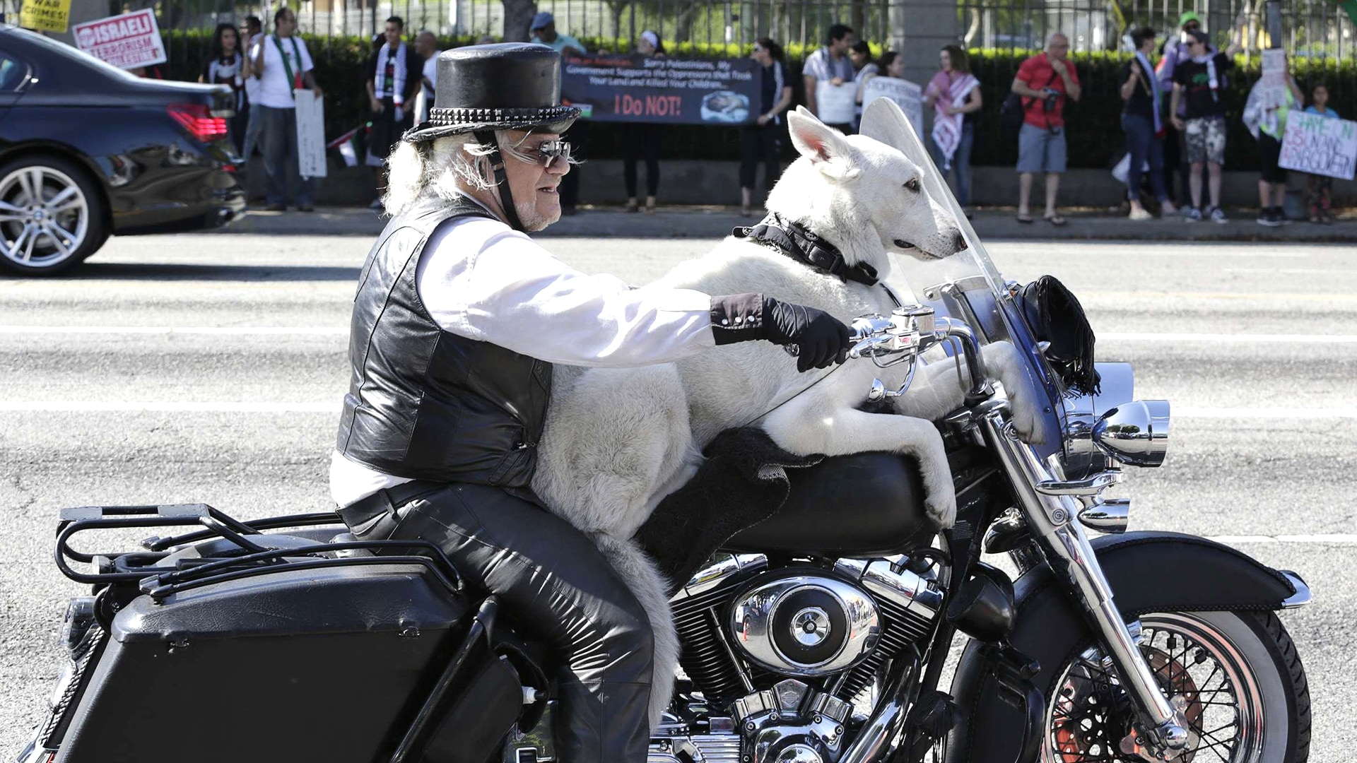 Image: Gerbracht rides his Harley Davidson motorcycle with his dog on Wilshire Boulevard in Los Angeles