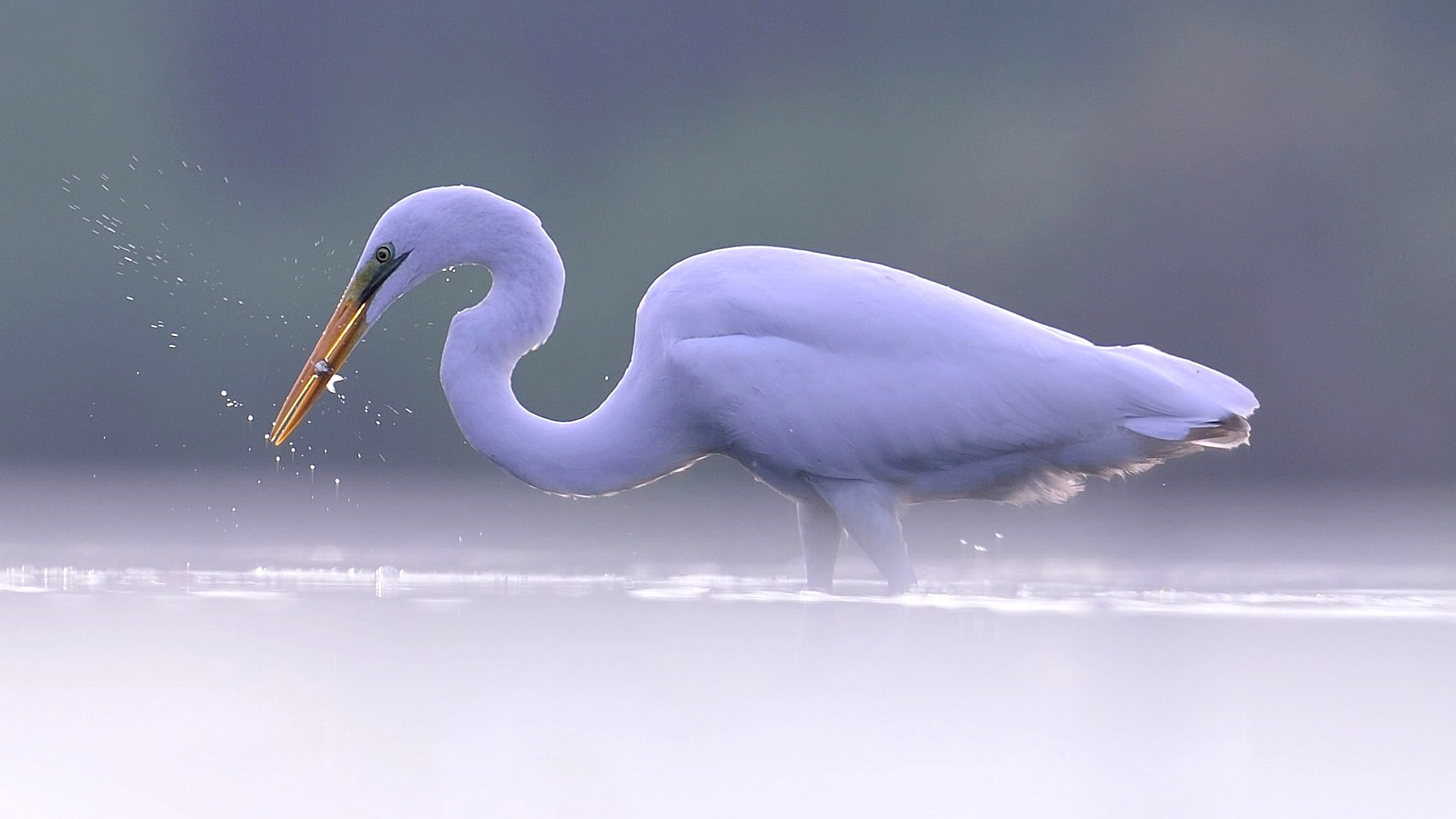 Image: South Korea animals - heron