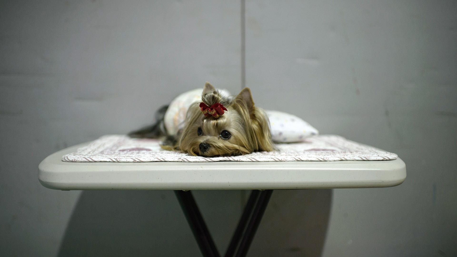 Image: SKOREA-ANIMAL-DOG